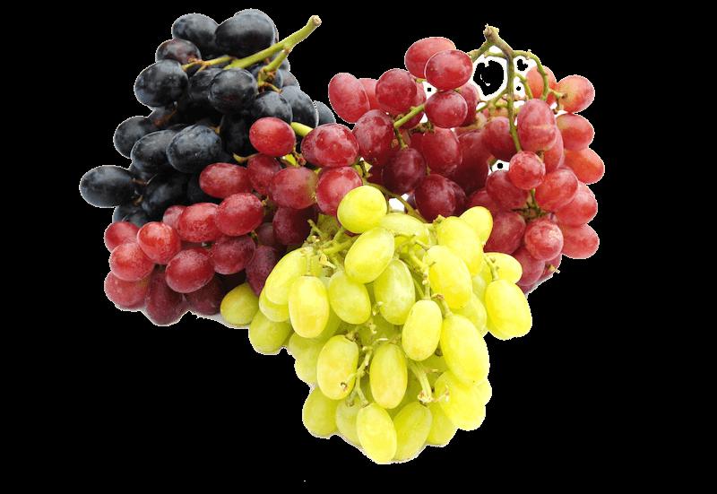 <p>Wir liefern Ihnen Vitamine nach Ihren Früchtewünschen bereits ab 5 Kg<br /> </p>
